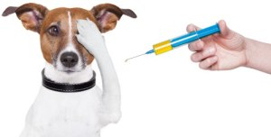 injection-dog